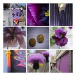 purplesmallframe